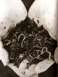 -vermiculture.jpg