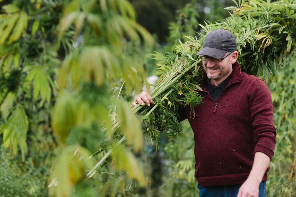 Glyn Mitchell carrying freshly harvested hemp