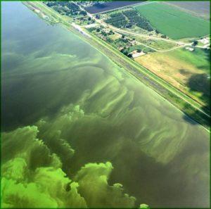 Aerial photo of algae off coast due to nitrogen run-off causing eutrophication