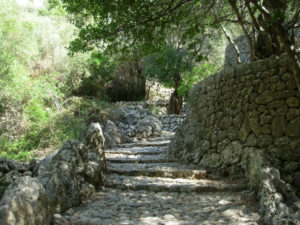 Stone stairway among trees