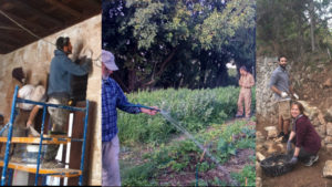 Three photo collage showing a person fixing mortar on an interior wall, someone watering plants on a farm, and someone building a retaining wall on a farm.