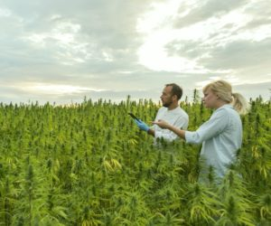 Two people standing in a field of tall plants.