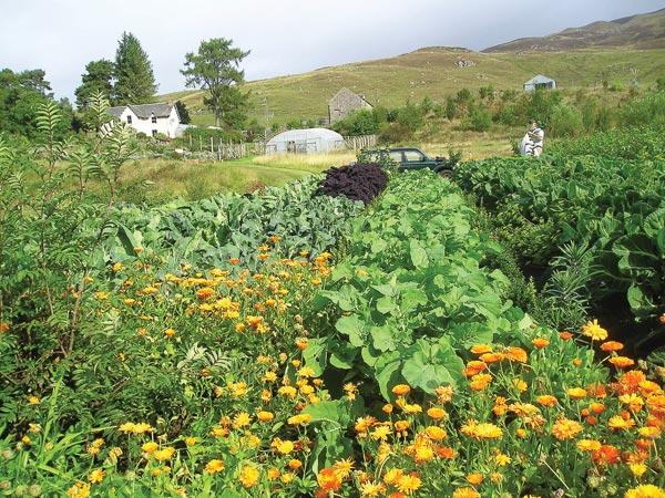 Garden-Photo